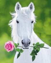 rose and horse